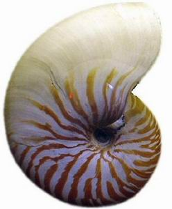 nauticus shell